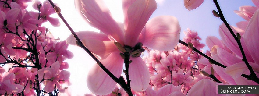 Flowers Facebook Covers