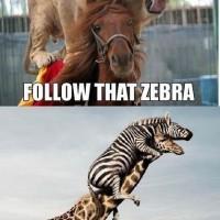 Follow That Zebra