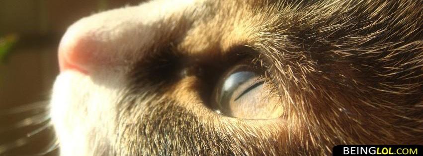 Cat Eyes FB Timeline