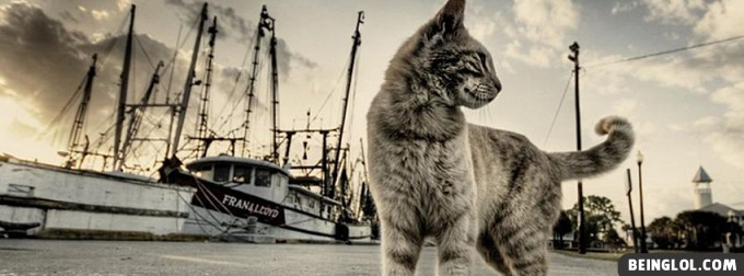 Cat And Boats Facebook Covers