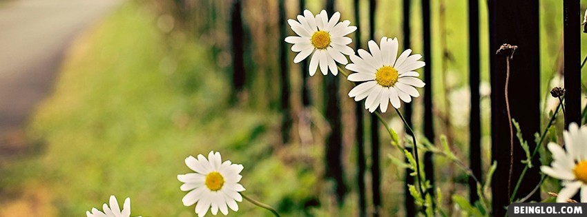 Flowers Chamomile Fence Facebook Covers