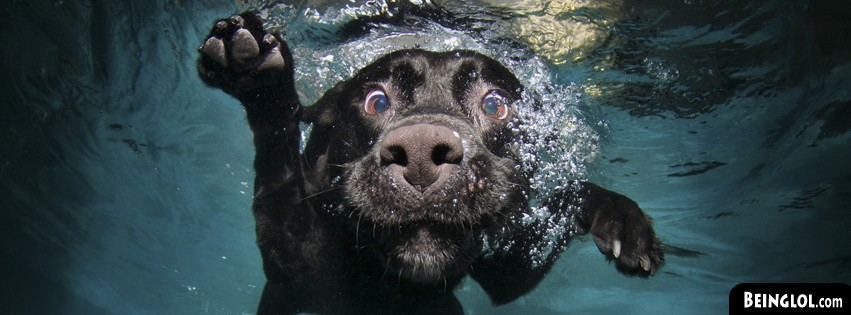 Funny Underwater Dog Facebook Covers