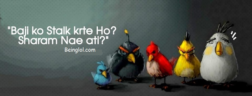 Funny Urdu Angry Birds Newest Facebook Cover Funny Urdu Angry