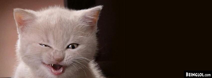 Kitty Stink Eye