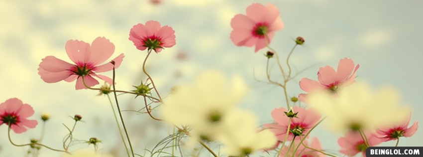 Light Pink Flowers Best Facebook Cover Light Pink Flowers Best