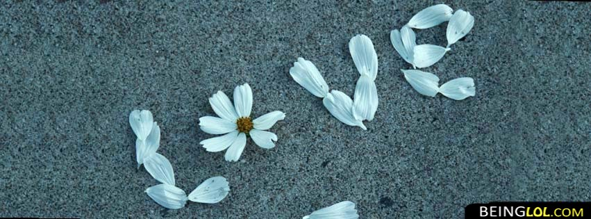 Love Flower Facebook Cover