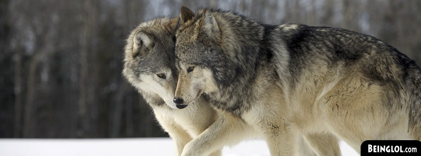 Lovely Wolf Couple Facebook Covers