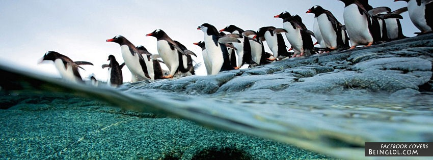 Penguins Diving Facebook Covers