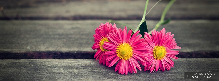 Pink Daisies Facebook Covers