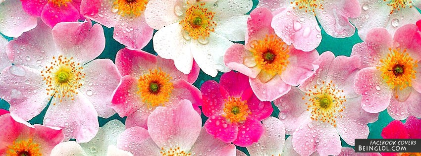 Pink Flowers Facebook Covers