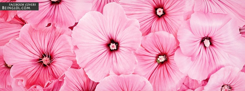 Pretty Pink Flowers Facebook Covers
