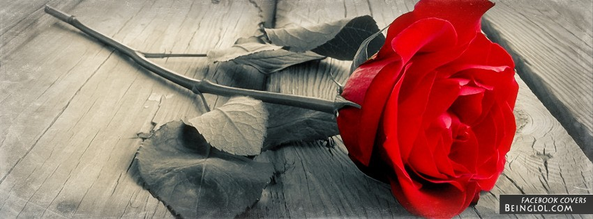 Red Rose Facebook Covers
