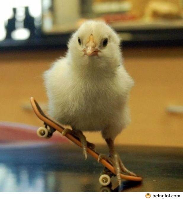 Just Skating