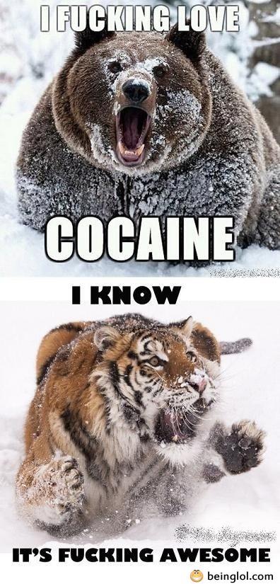 Bear Loves Cocaine