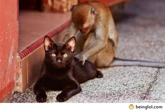 Hey Monkey! I Need a Massage!