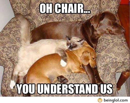 Oh Comfy Chair…