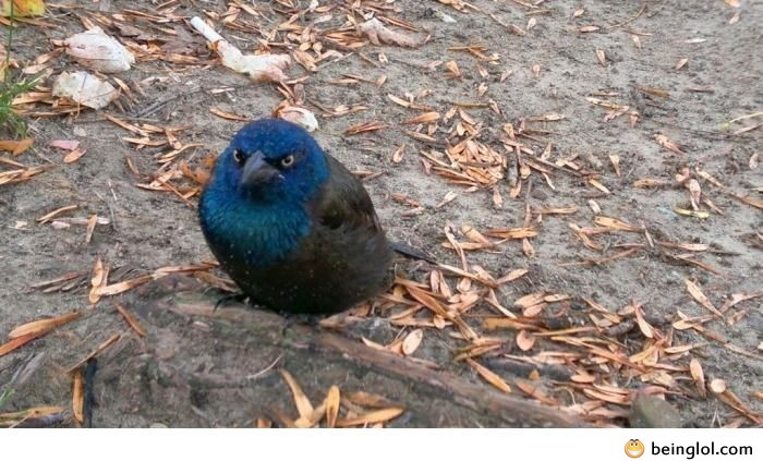 Found a Real Angry Bird Today
