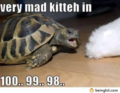 Very Mad Kitteh In …