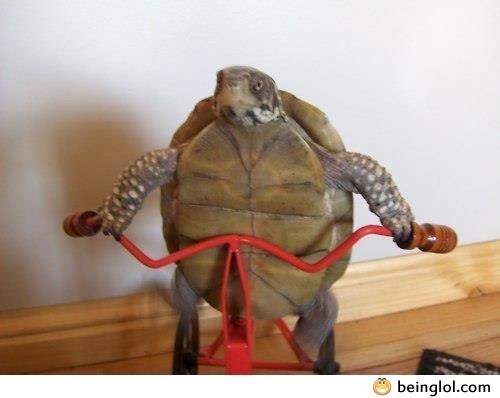 Turtle Working Out