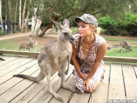 Kangaroo Photobombed On Paris Hilton