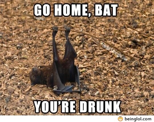 Go Home Bat!