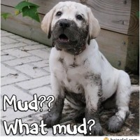 What Mud?