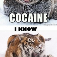 Bear Loves Cocaine