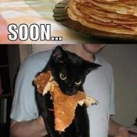 Damn Cat