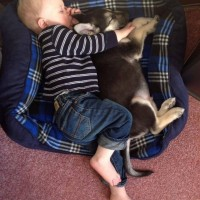 My Son And His Puppy, Friends For Life