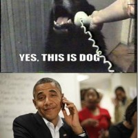 Dog Must Live In A Swing State