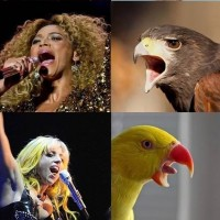 If Popstars Were Birds Justin Beiber Looks Hilarious