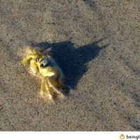 Crab Is Secretly Batman