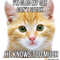 I'm Glad That Cats Can't Speak