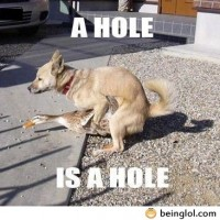 A Hole Is A Hole