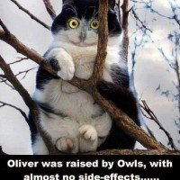 Raised By Owls