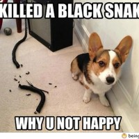 He Just Killed The Black Snake