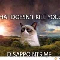 Grumpy Cat Hits Again