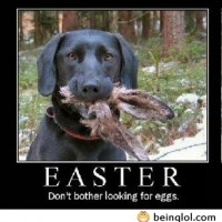 Funny Easter Picture