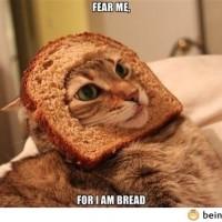 Fear Me!
