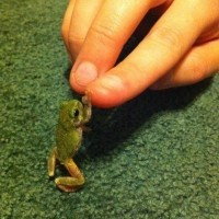 High Five Little Guy