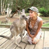 Kangaroo Photobombed On Paris Hilton