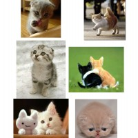 Top 9 Cute Cats