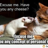 Have You Any Cheese?