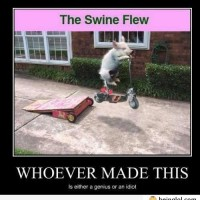 The Swine Flew