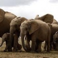 How many elephants are in this picture?