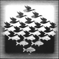 How many fishes are there in the picture?