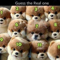 Guess which number is the real dog