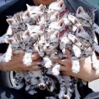 How many kittens?